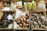 Display of shellfish , Brussels, Belgium — Stock Photo