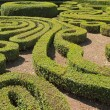 Ornamental cut boxwood garden in Bagnaia, Villa Lante, Viterbo,L - Stock Photo