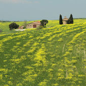 Beautiful tuscan landscape in the Val d Orcia in springtime, UN — Stock Photo
