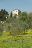 Villa in beautiful tuscan scenery in springtime, Italy, Europe — Stock Photo