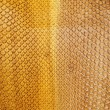 Stock Photo: Dyed python skin texture as background