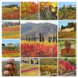 Autumnal tuscan vineyards collage, Italy, Europe — Stock Photo