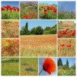 rurale landschap met rode papavers - collage, italia, Europa — Stockfoto