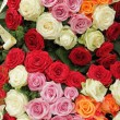 Funeral multicolor roses wreath — Stock Photo