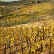 Tuscan landscape with autumnal vineyards and borgo Panzano in Ch — Stock Photo