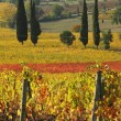 Постер, плакат: Fantastic landscape of tuscan vineyards in autumn at horizon St