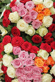 Funeral multicolor roses wreath — Stockfoto
