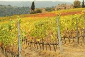Hermoso paisaje otoñal en la toscana con viñedos coloridos, — Foto de Stock