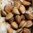Edible clams on belgian fish market, Brussels, Belgium, Europe — Stock Photo