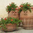 Foto Stock: Elegant traditional terracottvases with geranium flowers on tu