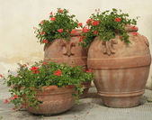 Elegant traditional terracotta vases with geranium flowers on tu — Stock Photo