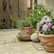 Flowering plants in decorated ceramic vases on tuscan narrow str — Stock Photo