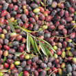 Raw olives fruits — Stock Photo