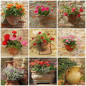 Collage with flowers in pots — Foto Stock