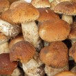 Porcini background — Stock Photo