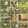 Tuscan farm collage — Stock Photo