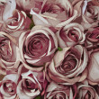 Pink rose pattern — Stock Photo