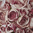 Pink rose pattern — Foto de Stock