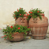 Elegant classic tuscan terracotta plant containers with geranium — Stock Photo