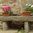 Flowerpots with colorful geranium plants in ceramic boxes — Stock Photo