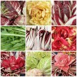 Red, yellow and green chicory mix — Stock Photo