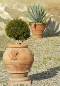 Plants in elegant ceramic planters — Foto Stock