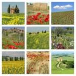 Flowering tuscan fields — Stock Photo