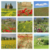 Flowering tuscan fields — Stock Photo