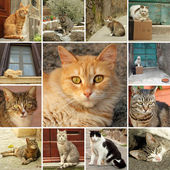 Cats collection — Stock Photo