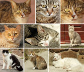 Katten collectie — Stockfoto