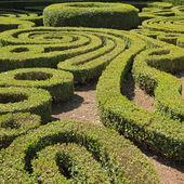 Сад декоративно вырезать самшит — Стоковое фото
