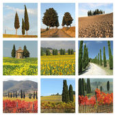 Collage with cypresses — Stockfoto