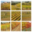 Vineyards in autumnal colors — Stock Photo