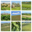 Vineyards collage — Stock Photo