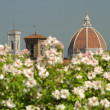 Roofs of florentine landmarks — Stock Photo #39801411