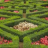 Geometric flowerbed — Stock Photo