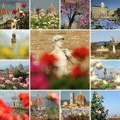 Flowering  collage — Stock Photo