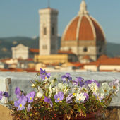 Roof garden with view of cathedral — Stock Photo