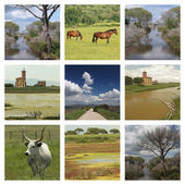 National Park l'Uccellina in tuscan Marem — Stock Photo