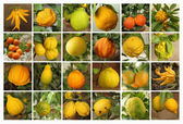 Citrus collection as background — Stock Photo