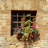 Window protected with grating and flowering plants on windowsill — Stock Photo