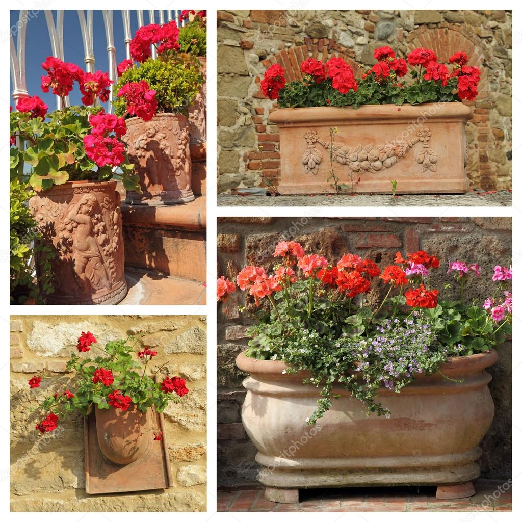 Gerani piante in vasi di terracotta foto stock for Vasi in terracotta prezzi
