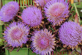 Purple flowers of artichoke — Stock Photo