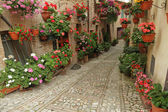 Old paved street with flowers — Stock Photo