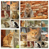 Group of images with cats — Stock Photo