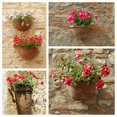 Petunias flowers in pots — Stock Photo