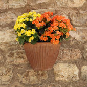 Petunias flowers in pot — Stock Photo
