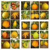Various citrus fruits — Stock Photo