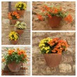 Plants in pots on antique stonewall — Stock Photo #50799499