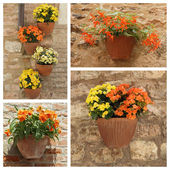 Plants in pots on antique stonewall — Stock Photo